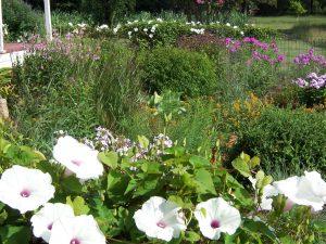 Native Cottage Garden