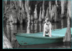 Swamp_Dog_Photo