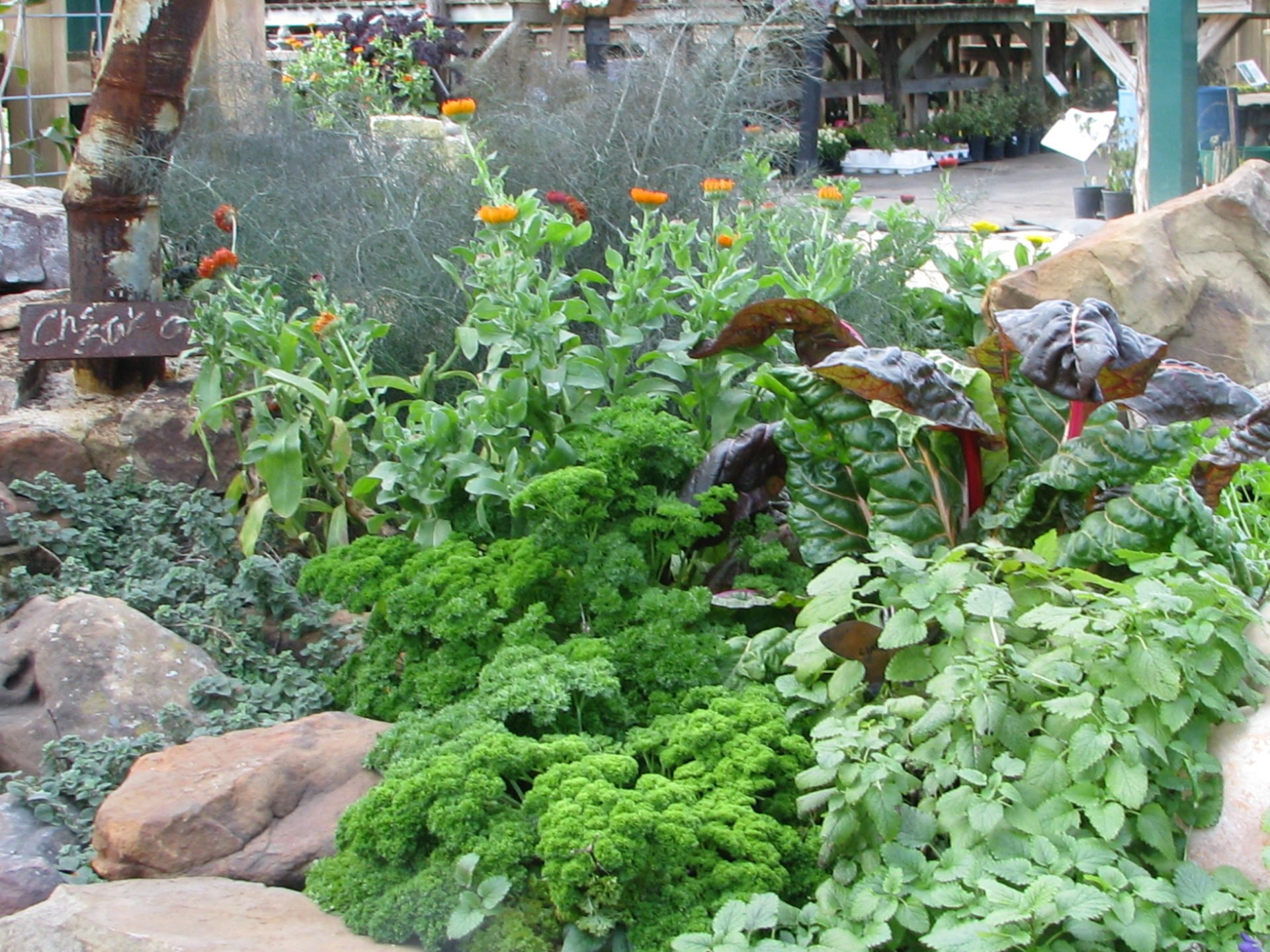 Landscaping With Edibles : Edible landscaping