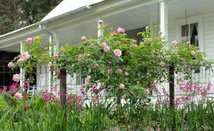 5. Garden