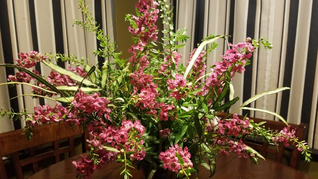 Angelonia arrangement