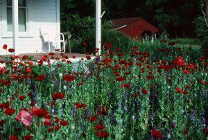 2. Wild seed cottage