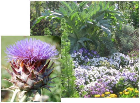 2flowers-cardoon