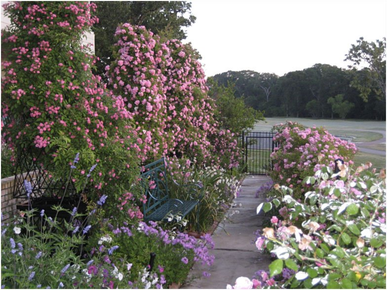 Image Result For Garden Gate Nursery New Orleans