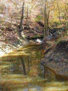 Beaver Dam-5