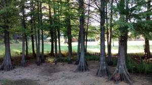 1. Dry swamp
