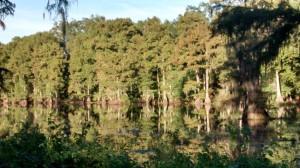 3. Caddo Lake