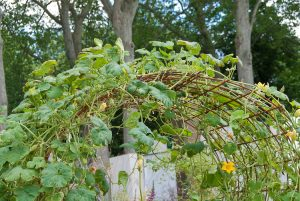 Squash Trellis Arbor with flowers