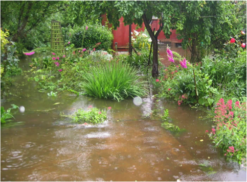 Caring for Your Garden after the Flood