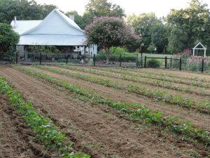 4. Veggie garden