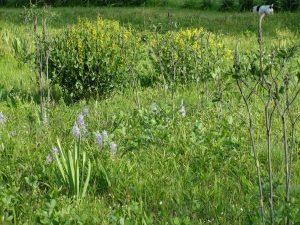 1. Pocket Prairie-Spring
