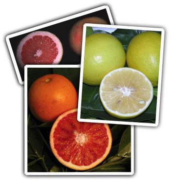 heidi_pick_citrus