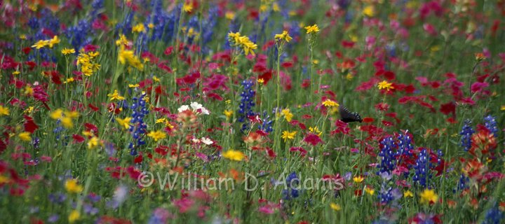 Pollination and the Spring Garden