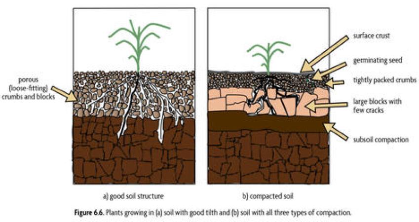 Master Your Soil