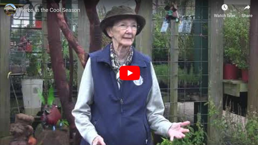 VIDEO: Herbs in the Cool Season