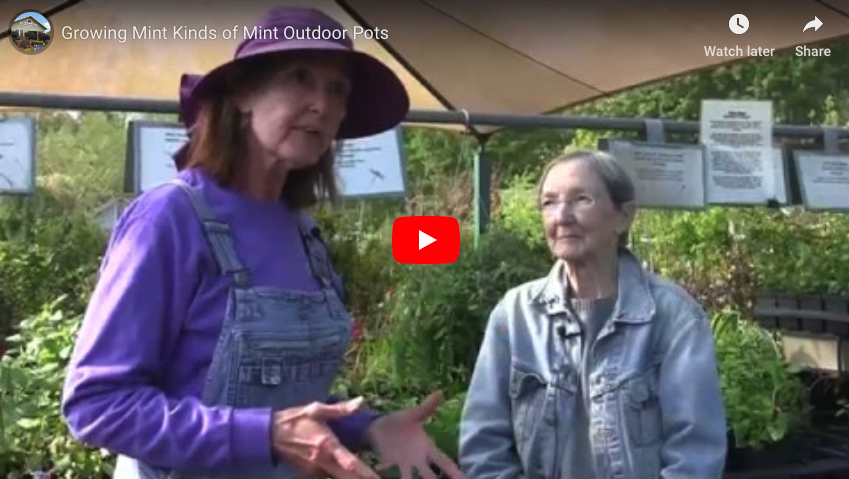 VIDEO: Growing Mint – Kinds of Mint, Outdoor Pots