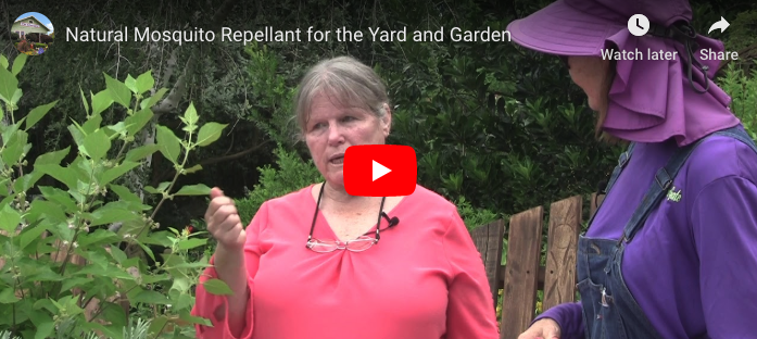 VIDEO: Natural Mosquito Repellant for the Yard and Garden