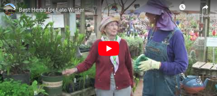 VIDEO: Best Herbs for Late Winter