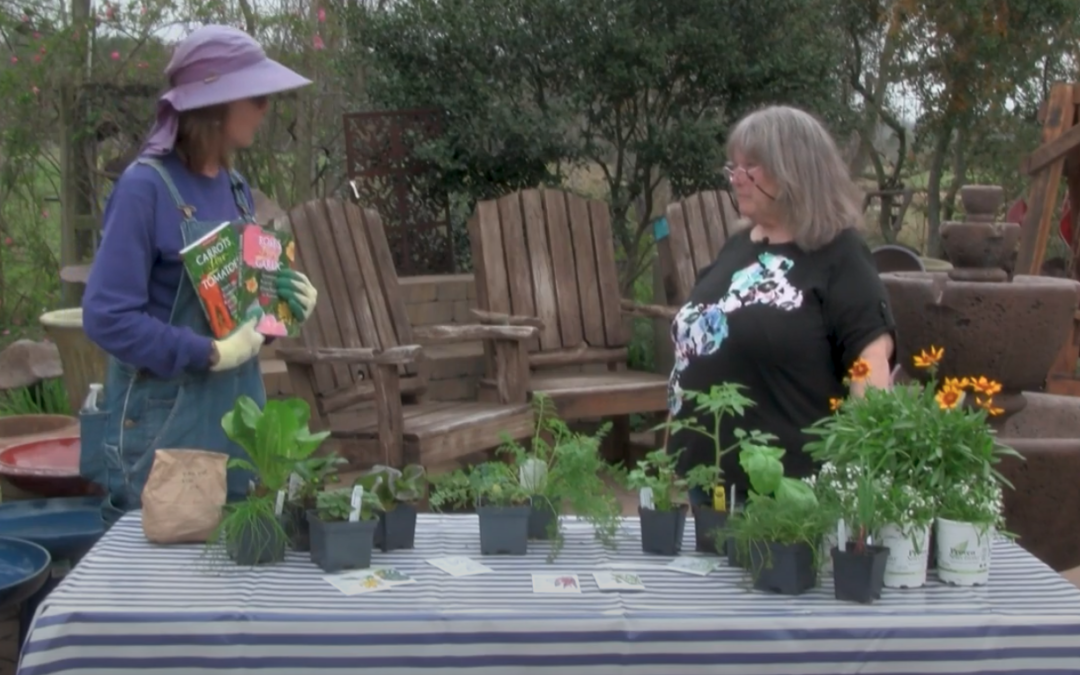VIDEO: An Introduction to Companion Planting