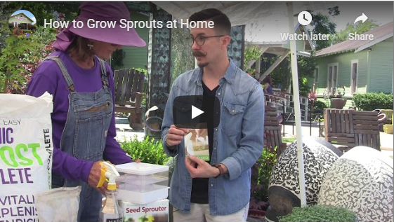 VIDEO: How to Grow Sprouts at Home