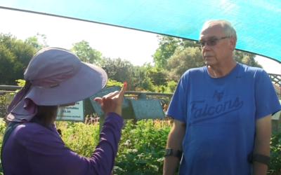 LIVE Customer Questions on Fall Tomatoes and Leaf Miner