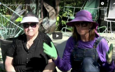VIDEO: What can I Plant in the Fall?