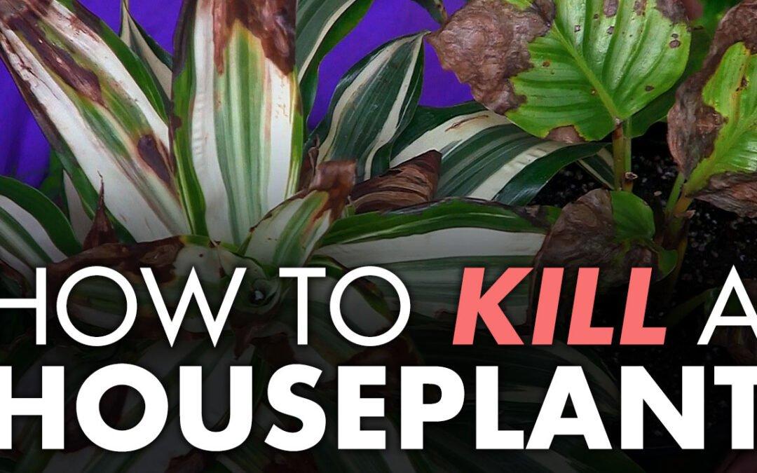 How to Kill a Houseplant